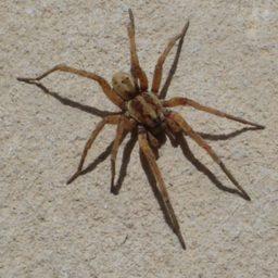 Уничтожение пауков в Сочи